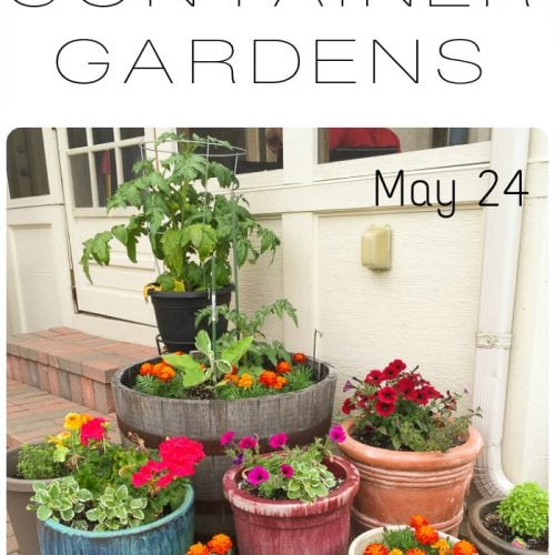 Simple Patio Container Gardens