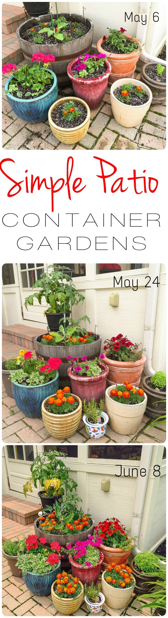 Simple Patio Container Gardens | Home & Plate | www.homeandplate.com | In a month