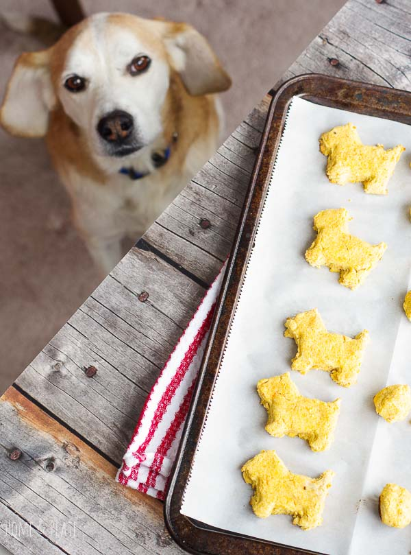 Grain-free dog treat recipe for dogs with allergies | www.homeandplate.com | Specially made dog biscuits made with coconut flour for dogs with allergies. #dogtreat #dogbiscuits #dogbones