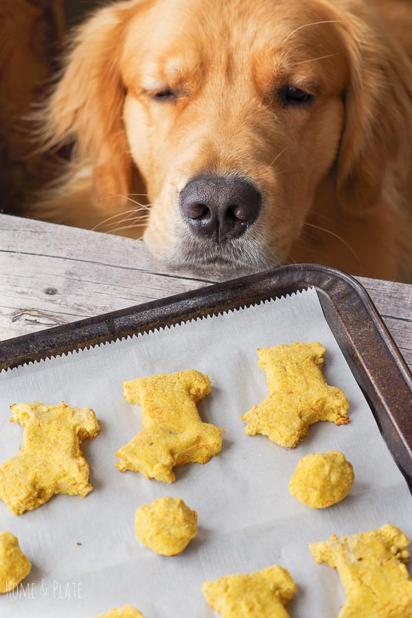 Dog Treat Recipe for Dogs with Allergies (Grain Free)