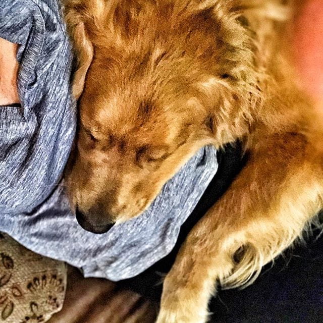 "Make yourself comfortable Indy? Does your dog sit next to you or on you? 😊</noscript></div></div></div></div><p><a href=""//www.pinterest.com/pin/create/button/"" data-pin-do=""buttonBookmark""  data-pin-color=""red"" data-pin-height=""128""><img src=""//assets.pinterest.com/images/pidgets/pinit_fg_en_rect_red_28.png"" /></a></p><div class=""crp_related ""><h3>You May Also Like:</h3><ul><li><a href=""https://www.homeandplate.com/blog/moist-chocolate-chip-banana-bread-with-a-pecan-cinnamon-topping/""    ><img  width=""300"" height=""300""  src=""https://www.homeandplate.com/wp-content/uploads/2018/11/moist-chocolate-chip-banana-bread-1.jpg"" class=""crp_thumb crp_featured"" alt=""Moist Chocolate Chip Banana Bread with a Pecan Cinnamon Topping"" title=""Moist Chocolate Chip Banana Bread with a Pecan Cinnamon Topping"" srcset=""https://www.homeandplate.com/wp-content/uploads/2018/11/moist-chocolate-chip-banana-bread-1-150x150.jpg 150w, https://www.homeandplate.com/wp-content/uploads/2018/11/moist-chocolate-chip-banana-bread-1-100x100.jpg 100w"" sizes=""(max-width: 300px) 100vw, 300px"" /><span class=""crp_title"">Moist Chocolate Chip Banana Bread with a Pecan…</span></a></li><li><a href=""https://www.homeandplate.com/blog/apple-carrot-oatmeal-muffins/""    ><img  width=""300"" height=""300""  src=""https://www.homeandplate.com/wp-content/uploads/2018/10/apple-carrot-oatmeal-muffins (1).jpg"" class=""crp_thumb crp_featured"" alt=""Apple Carrot Oatmeal Muffins"" title=""Apple Carrot Oatmeal Muffins"" srcset=""https://www.homeandplate.com/wp-content/uploads/2018/10/apple-carrot-oatmeal-muffins%20(1)-150x150.jpg 150w, https://www.homeandplate.com/wp-content/uploads/2018/10/apple-carrot-oatmeal-muffins%20(1)-100x100.jpg 100w"" sizes=""(max-width: 300px) 100vw, 300px"" /><span class=""crp_title"">Apple Carrot Oatmeal Muffins</span></a></li><li><a href=""https://www.homeandplate.com/blog/2015-3-guinness-beer-bread/""    ><img  width=""300"" height=""300""  src=""https://www.homeandplate.com/wp-content/uploads/2015/03/guinness-beer-bread-6-500x500.jpg"" class=""crp_thumb crp_featured"" alt=""Guinness Beer Bread"" title=""Guinness Beer Bread"" srcset=""https://www.homeandplate.com/wp-content/uploads/2015/03/guinness-beer-bread-6-500x500.jpg 500w, https://www.homeandplate.com/wp-content/uploads/2015/03/guinness-beer-bread-6-150x150.jpg 150w"" sizes=""(max-width: 300px) 100vw, 300px"" /><span class=""crp_title"">Guinness Beer Bread</span></a></li><li><a href=""https://www.homeandplate.com/blog/double-chocolate-zucchini-muffins/""    ><img  width=""300"" height=""300""  src=""https://www.homeandplate.com/wp-content/uploads/2018/05/double-chocolate-zucchini-muffins-6-500x500.jpg"" class=""crp_thumb crp_featured"" alt=""Double Chocolate Zucchini Muffins"" title=""Double Chocolate Zucchini Muffins"" srcset=""https://www.homeandplate.com/wp-content/uploads/2018/05/double-chocolate-zucchini-muffins-6-500x500.jpg 500w, https://www.homeandplate.com/wp-content/uploads/2018/05/double-chocolate-zucchini-muffins-6-150x150.jpg 150w"" sizes=""(max-width: 300px) 100vw, 300px"" /><span class=""crp_title"">Double Chocolate Zucchini Muffins</span></a></li></ul><div class=""crp_clear""></div></div><div class=""simplesocialbuttons simplesocial-round-icon simplesocialbuttons_inline simplesocialbuttons-align-left post-3910 post  simplesocialbuttons-inline-no-animation""> <button rel=""nofollow"" class=""simplesocial-pinterest-share"" onclick=""var e=document.createElement("