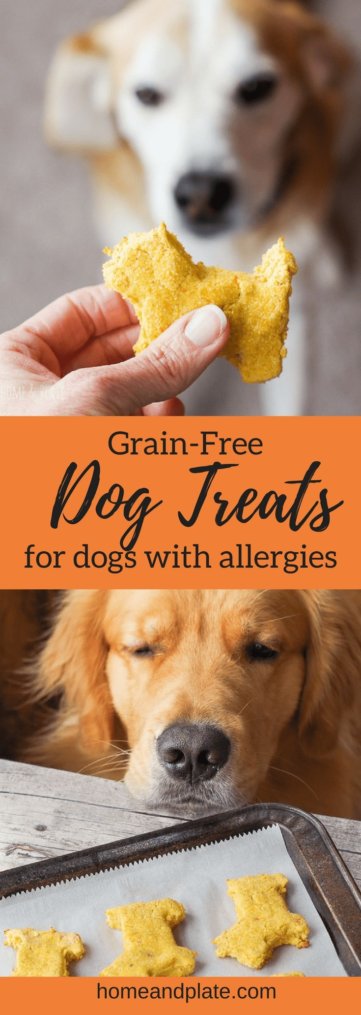 Grain-free dog treat recipe for dogs with allergies   www.homeandplate.com   Specially made dog biscuits made with coconut flour for dogs with allergies. #dogtreat #dogbiscuits #dogbones